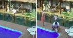VÍDEO: Câmera de segurança filma resgate de cãozinho na piscina e atitude de homem rende aplausos!