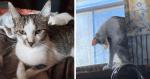 Sem querer, dona faz clique de sua gata e fotografia acaba tendo detalhe ASSUSTADOR