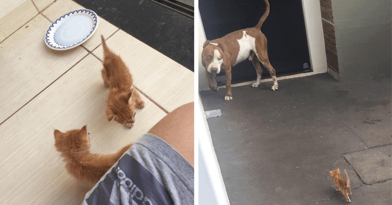 Desconhecido joga gatinhos para pitbull e reação do cão é a mais AMÁVEL de todas!