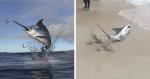 VÍDEO: Banhistas ajudam Marlim em orla e conseguem salvar peixe mais rápido do mundo