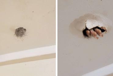 Mulher encontra bolinha de pelo em seu teto e descobre que algo SINISTRO vivia em sua casa