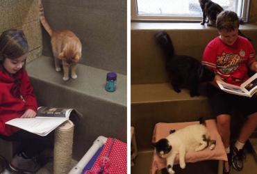 Abrigo cria programa de leitura para crianças terem o hábito lendo para os gatinhos