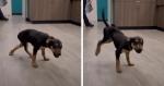 VÍDEO: Funcionário de pet shop canta para doguinho e ele reage com dancinha CONTAGIANTE