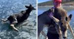 Amigos colocam suas vidas em risco, mas não desistem de salvar cervo de lago congelado