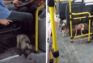 Motorista deixa cães se abrigarem de chuvas dentro de ônibus e passageiros reagem da melhor forma