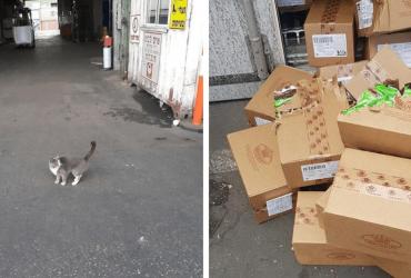 Gato passa 3 semanas 'viajando' em contêiner e sobrevive comendo as caixas de...
