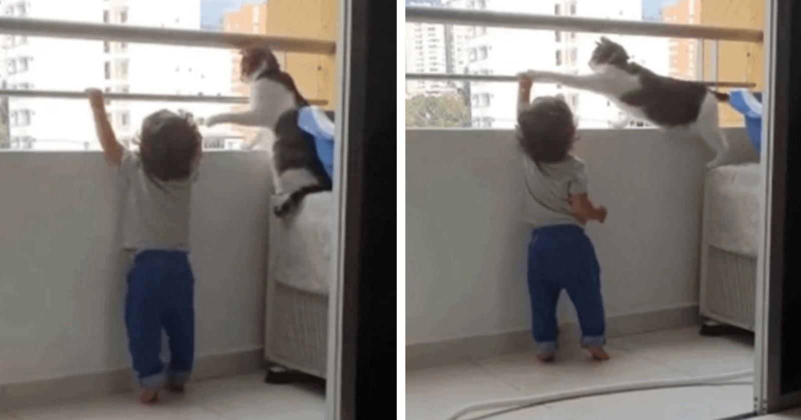 Gato se torna VIRAL ao aparecer protegendo criança que tentava subir em varanda