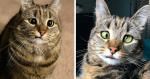 Mulher se apaixona por gatinha e sua fofura se destaca sobre deficiência e estrabismo