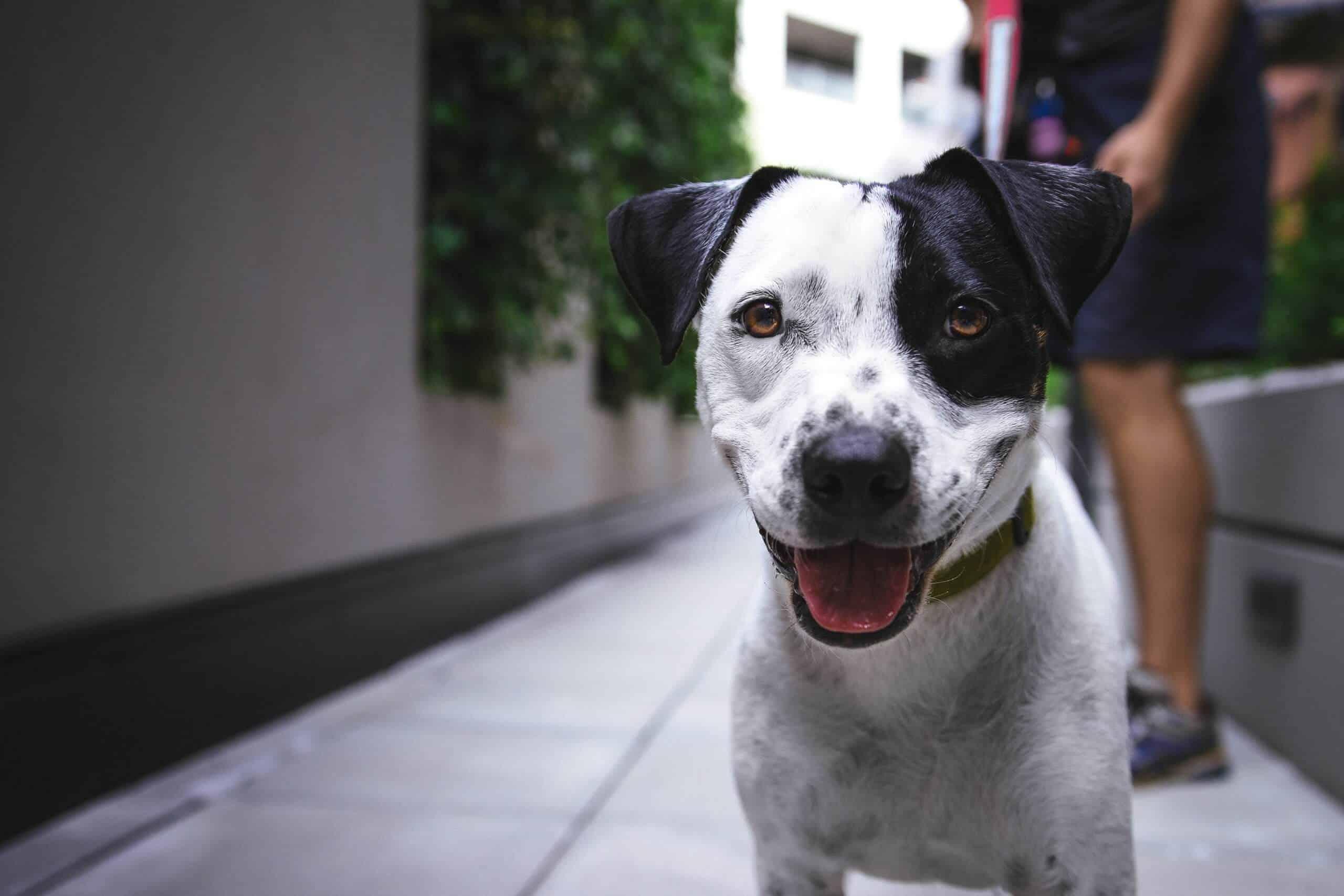 legendas-fotos-cachorros