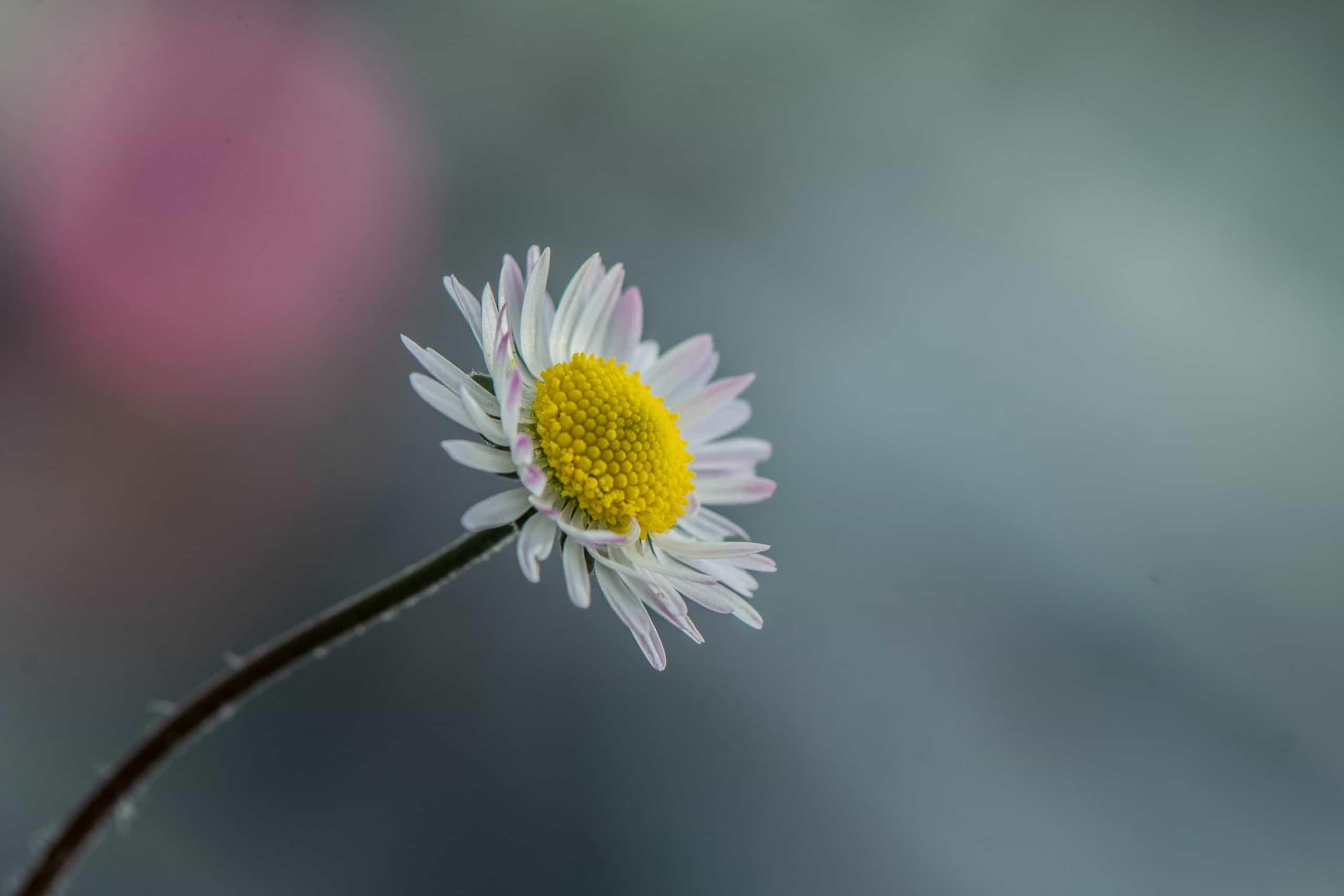 Se você soubesse o PODER e as ENERGIAS que esta flor traz, a teria em casa!