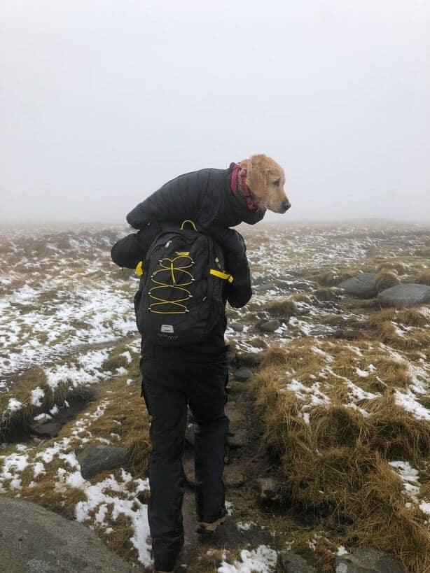 Casal encontram cadela congelada que estava perdida em montanha e a resgata de forma emocionante