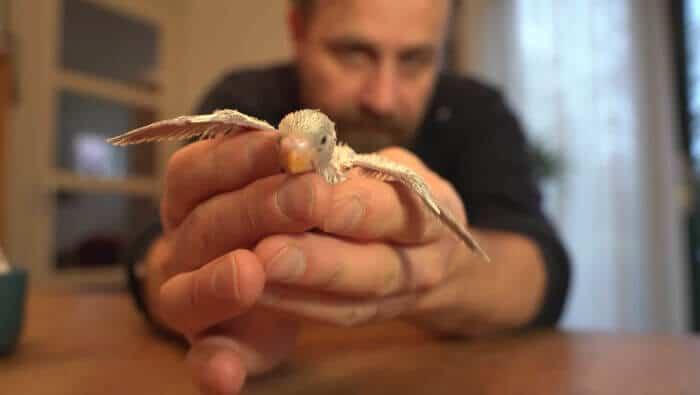 Esse homem encontrou um ovo abandonado por acaso e o que ele fez? O chocou!