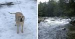 Após acidente, cadela consegue salvar vida de seu dono levando à polícia até o local