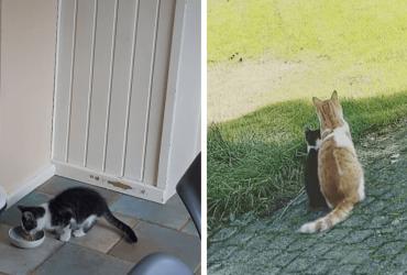Ao encontrar filhote sem lar, gato o leva para casa e família faz a melhor coisa por ele!