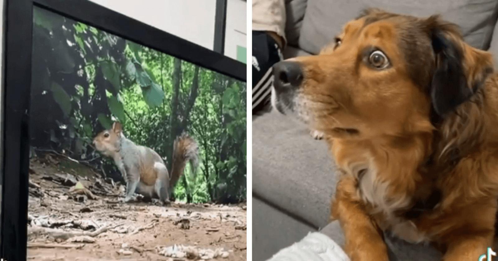 VIRAL: Cadela tem reação ASSUSTADORA e hilária ao ver cena de esquilos na TV