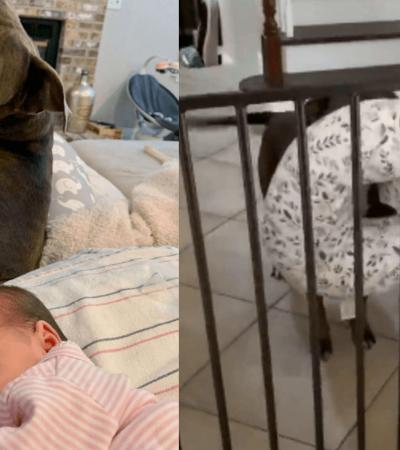 Ao ouvir bebê chorar, cachorro busca para mãe o que ela precisa para consolá-lo