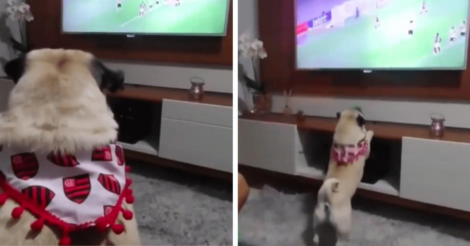 Doguinho se torna queridinho da torcida, depois de comemorar GOL do Flamengo