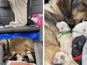Para proteger cadela e filhotes durante parto, família fica 12 horas dentro de carro no Texas