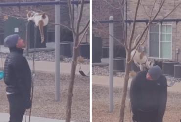 QUE AMOR! Dono leva gatinho ao parque e brincadeira entre eles é a coisa mais linda!