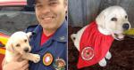 Corpo de bombeiros recebe novo 'socorrista' em equipe e sua fofura chama atenção