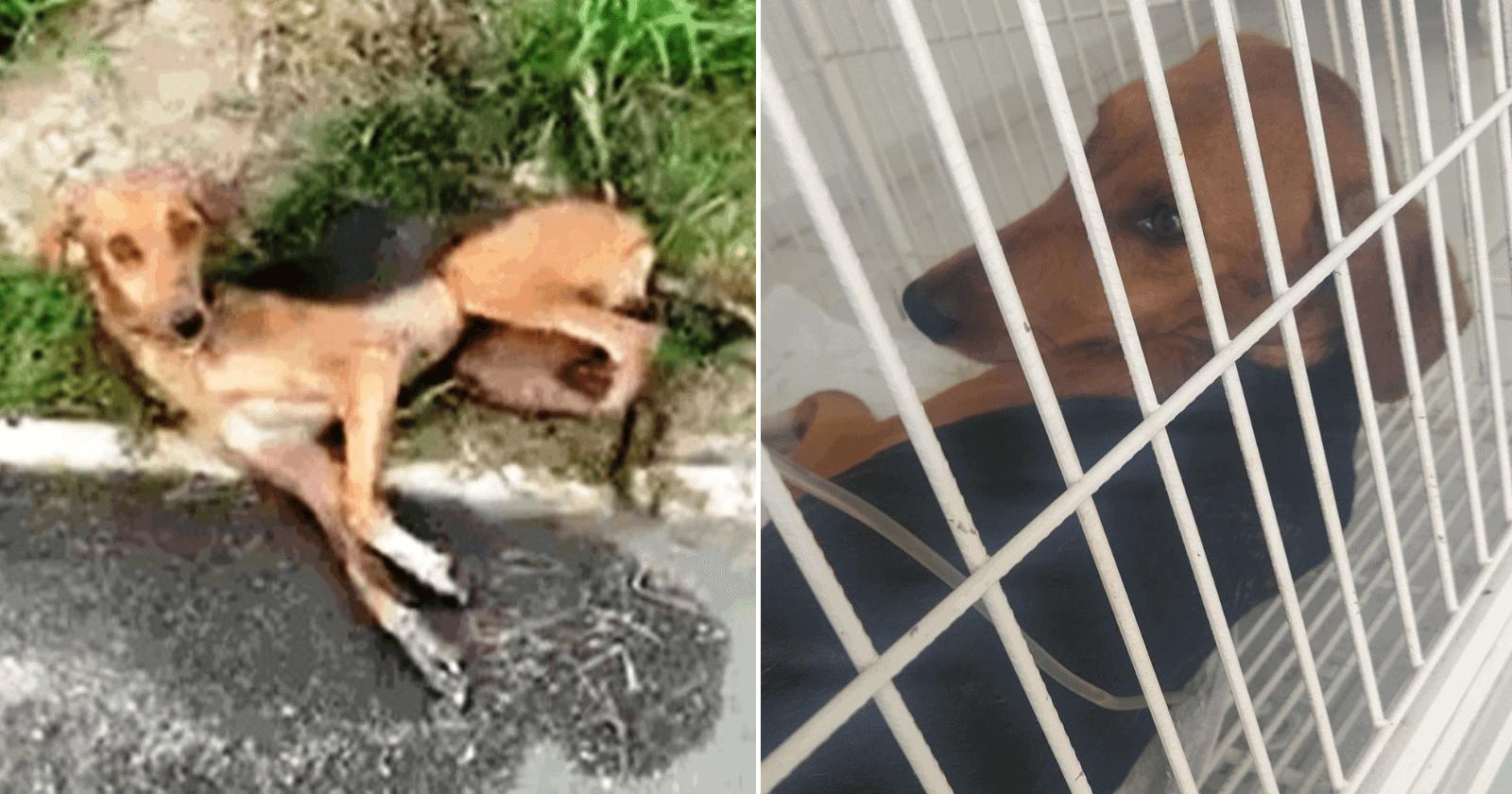 Jogada de um carro em movimento, cadelinha é resgatada de vala e procura lar para adoção