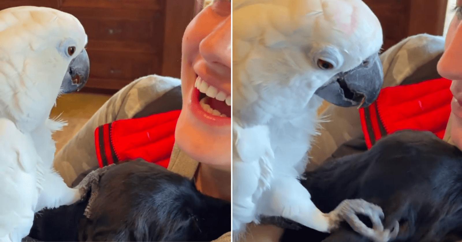 Cacatua conhece cachorro pela primeira vez e fala o mais inesperado: 'i love you'