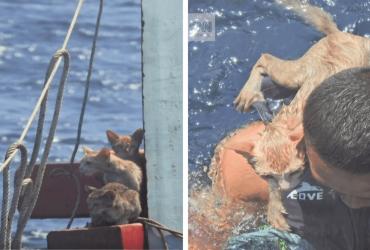 Marinha resgata gatinhos embarcação que estava afundando: 'foi por acaso'