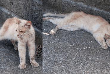 Homem encontra gato em estado deplorável e lhe deixa irreconhecível meses depois