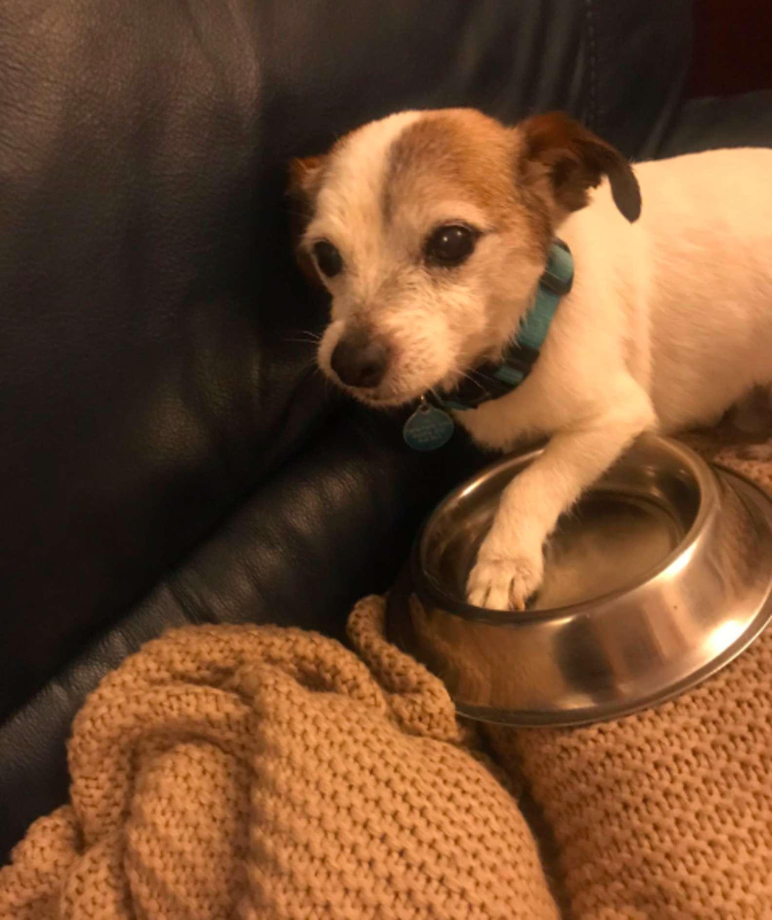 Cachorro resgatado ganha tigela para comida e passa a dormir com ela para não perdê-la