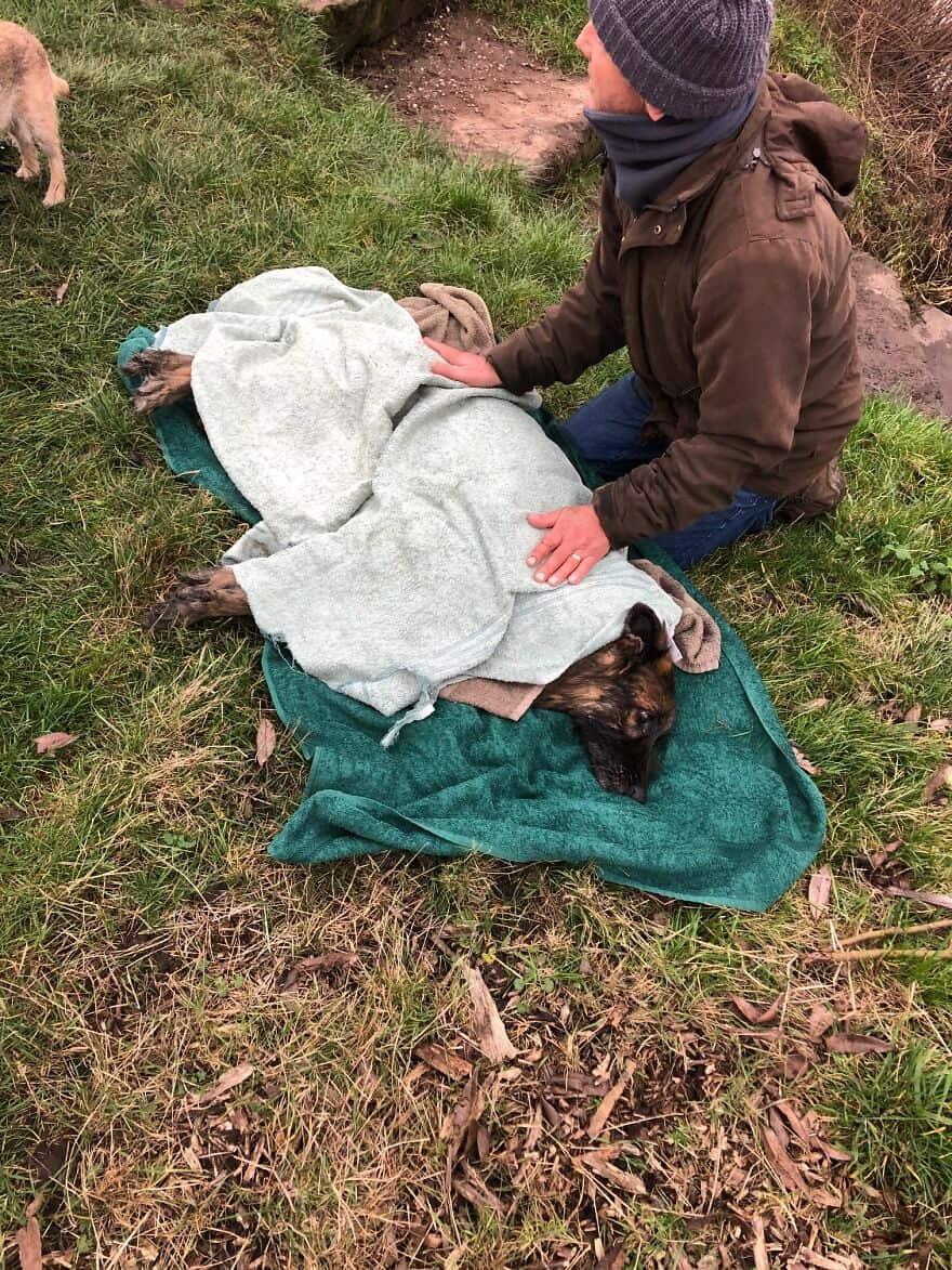 Cadela idosa deixada para morrer amarrada em pedra dentro d'água é resgatada e passa por reviravoltas!