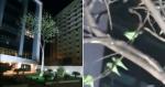Árvore sem folhas é tomada por casais de periquitos e beleza se torna surreal