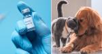 Vacina contra Covid-19 para animais é registrada pela primeira vez em todo o mundo!