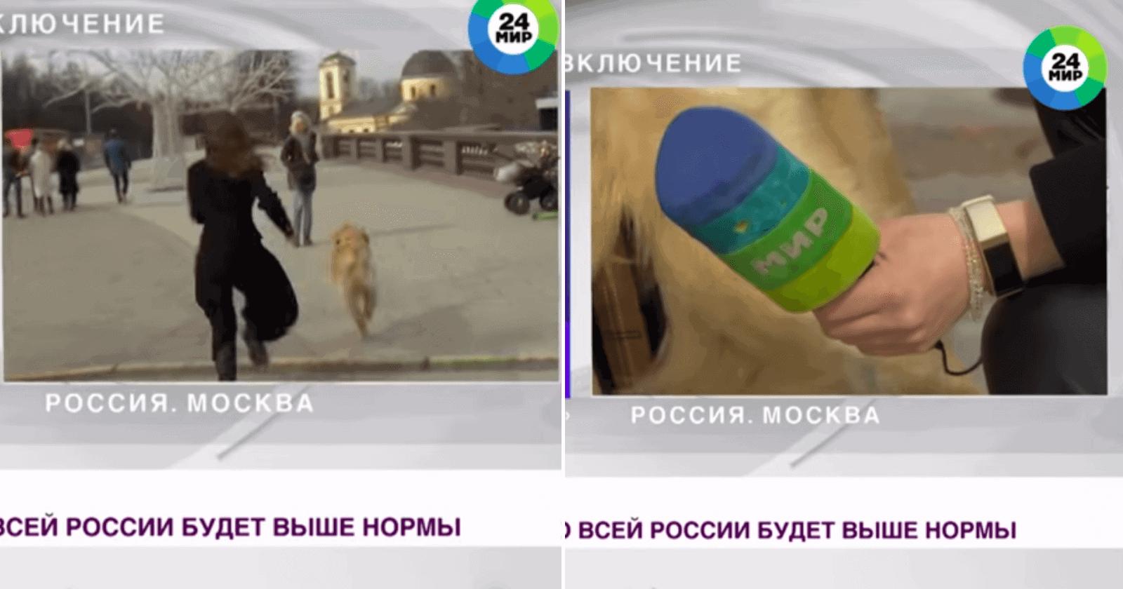 Cachorro invade transmissão ao vivo e rouba o microfone da repórter