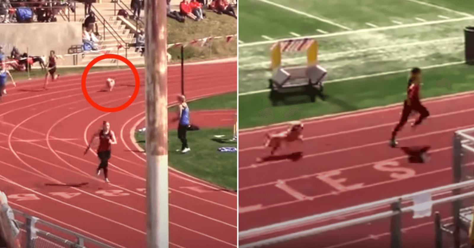 VÍDEO: Cachorro invade corrida e deixa competidora em segundo lugar