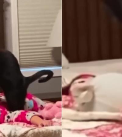 Mãe encontra filha e gata em situação hilária e web questiona: 'como ela conseguiu isso?'