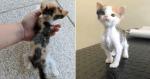 Gatinha que tinha corpo pequeno ganha cuidados e passa por transformação surpreendente
