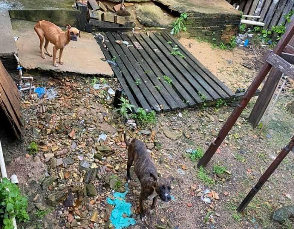 Polícia invade casa e resgata cães que estavam abandonados em quintal fechado
