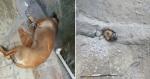 Bombeiros resgatam cadela que ficou presa tentando olhar casa da vizinha