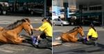 Agente de trânsito passa manhã acalmando égua que sofreu acidente