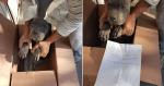 Menino deixa seu cachorro em abrigo com bilhete comovente