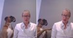 Cachorro invade videoaula e faz algo INUSITADO com professora
