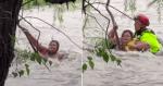 Bombeiro salva mulher pendurada em galho no meio da correnteza