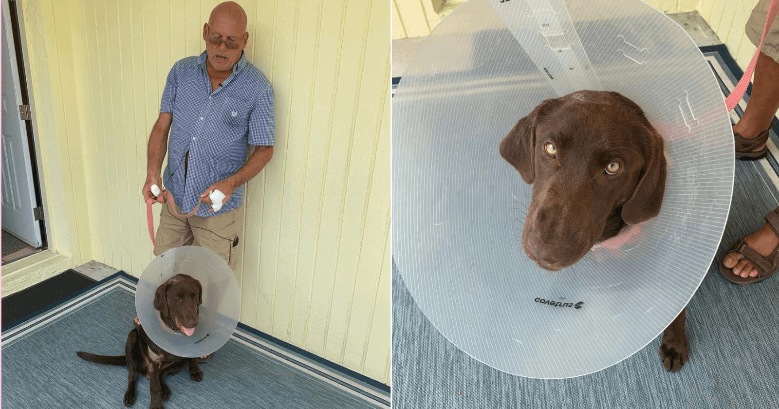 Homem salva cachorro que tinha sido atacado por crocodilo
