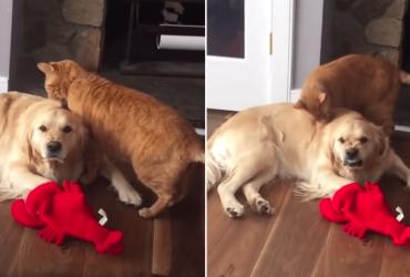 Ao ser cheirado por gato, cachorro reage de forma silenciosa e HILÁRIA