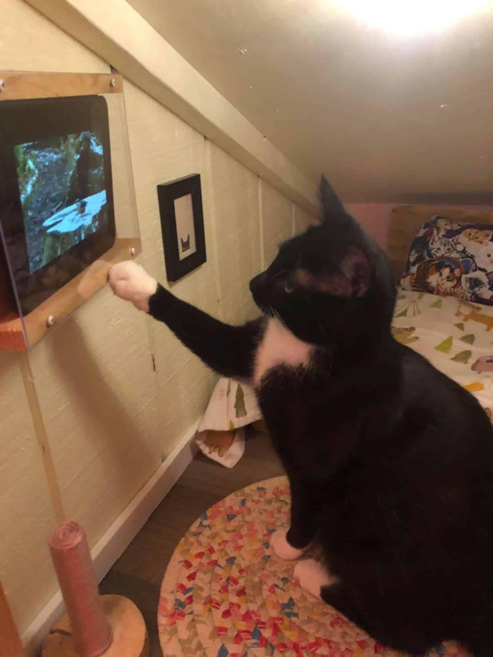 Dono transforma canto vazio em um quarto INCRÍVEL para o gato