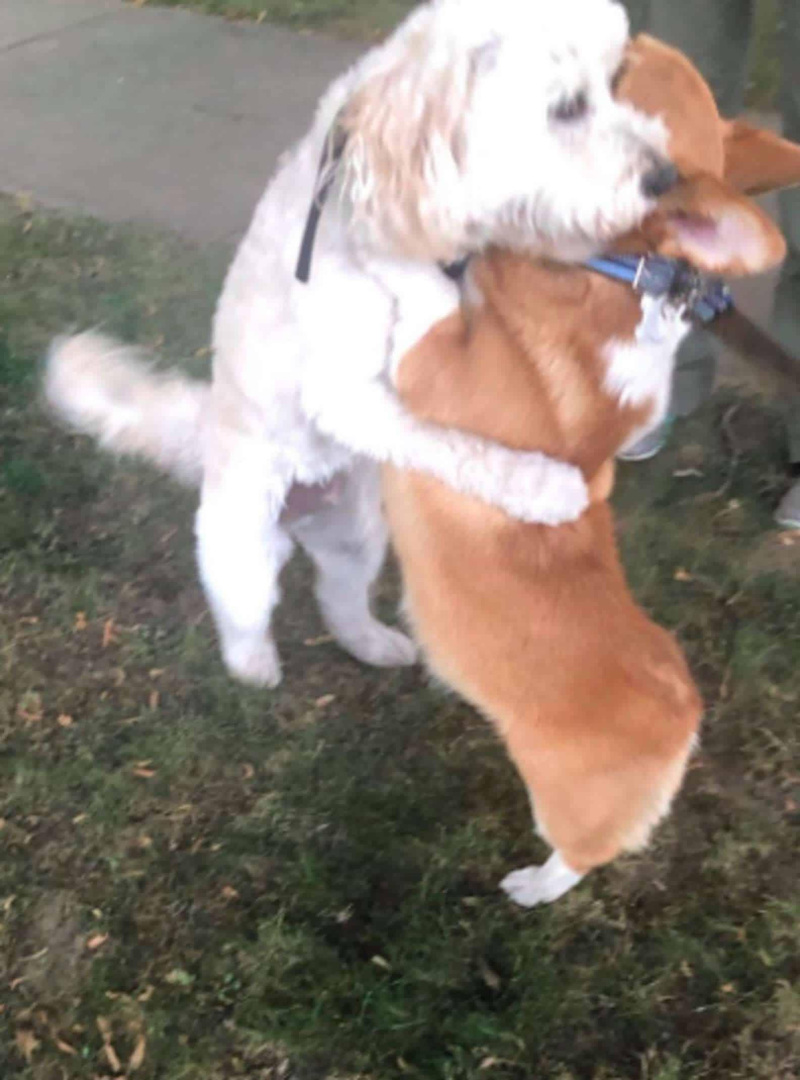 Que FOTO! Ao ver 'amigos', cachorro os cumprimenta com abraço