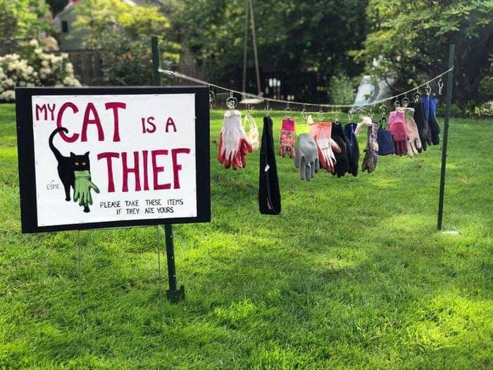 Dona faz varal para entregar coisas trazidas por gato obcecado por luvas