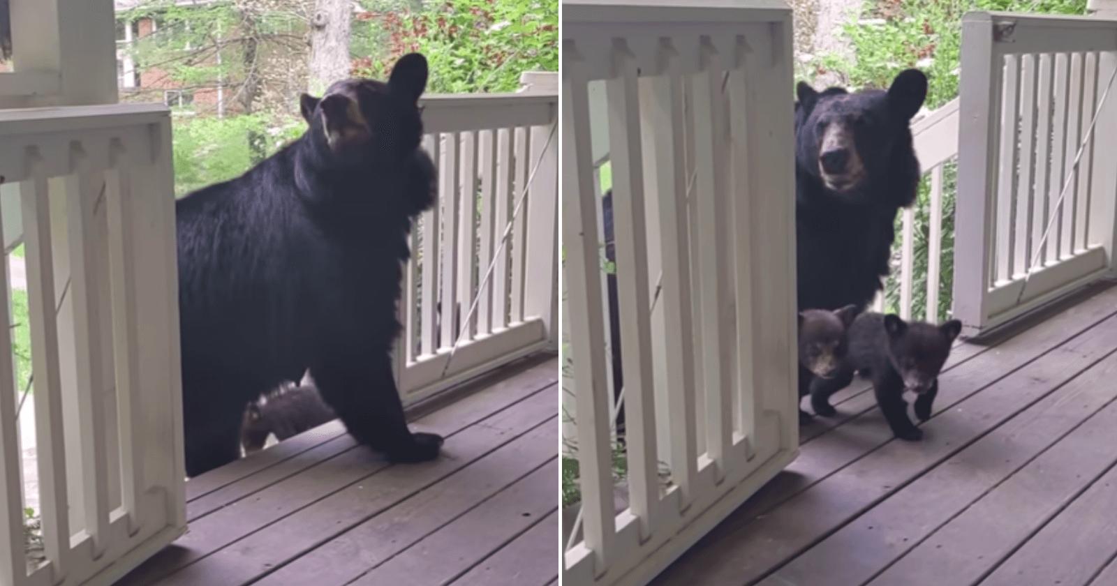 Que amor! Ursa apresenta seus filhotes para amigo humano