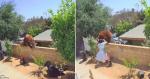Mulher se torna viral ao defender seus cachorros de urso