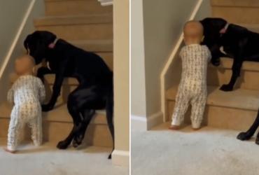 Cadela impede bebê de subir escada empurrando sua perninha